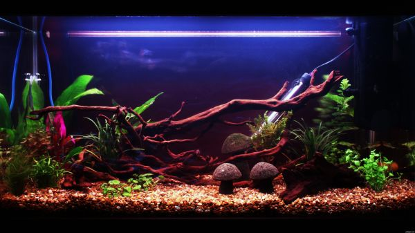 Brilliantly Artistic Fish Tank Takes Plenty Of Care To Craft Decorated ...